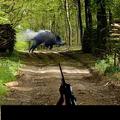 狩猎野猪游戏